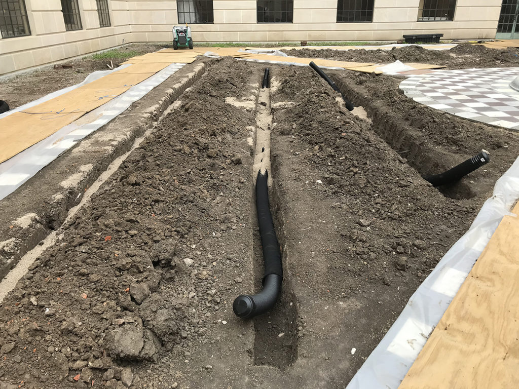 Proper drainage in the heavy compacted soil will help plant survival